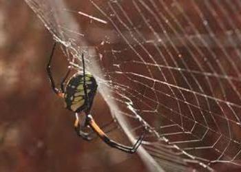 Почему нельзя убивать пауков - миф или реальность?