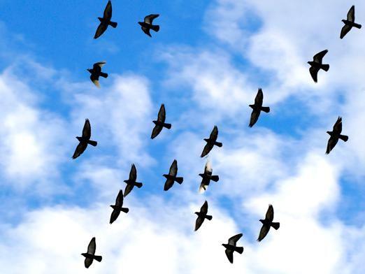 Чому птахи відлітають?