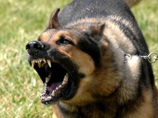 Почему собаки лают?