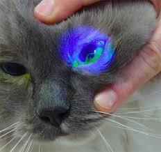 сильно сльозяться очі у кота