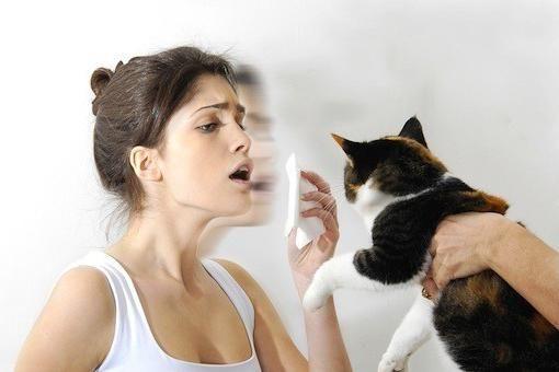 алергія на кішок