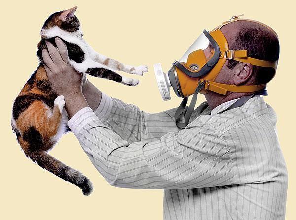 кішки не викликають алергію