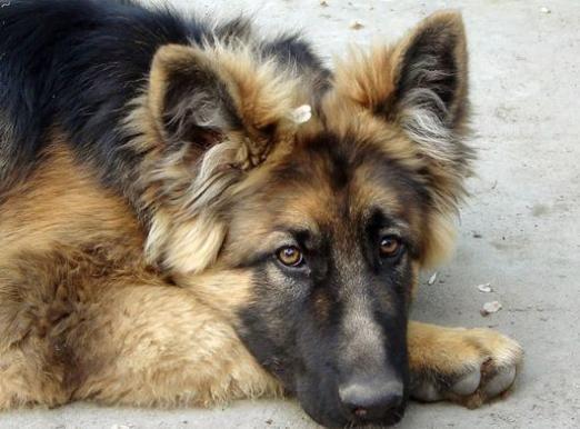 Понос у собаки: что делать?