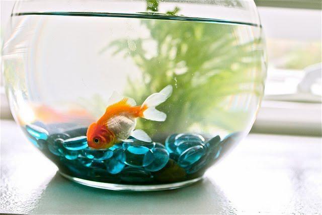 рибка для маленького акваріума