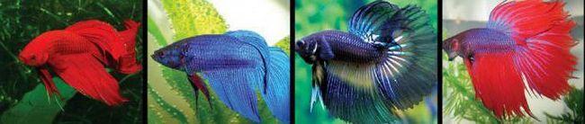 види рибок