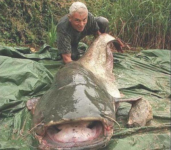 Самый большой сом: рыбацкие байки