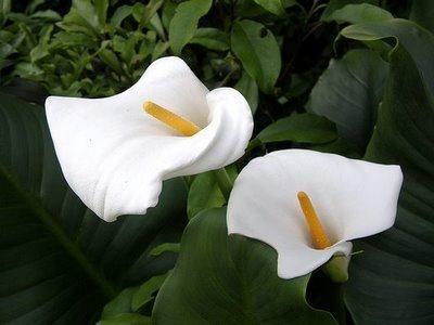 Самый красивый цветок в мире. какой он?