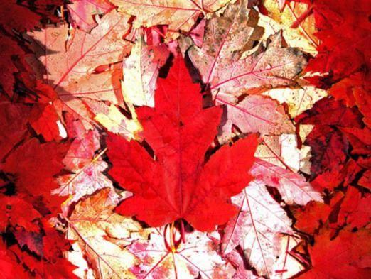 Система образования канады: особенности и преимущества