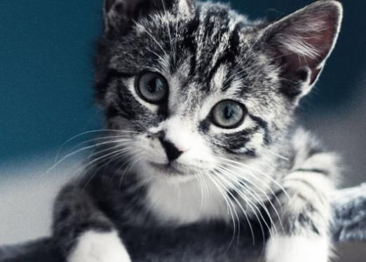 Сколько должен весить котенок?
