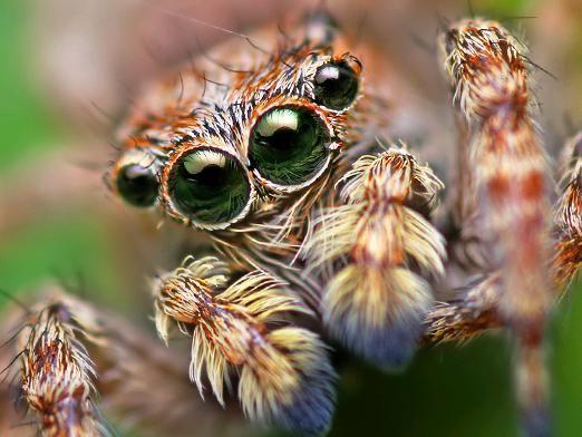 Скільки очей у павука?