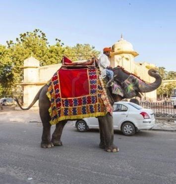 скільки важить слон індійський