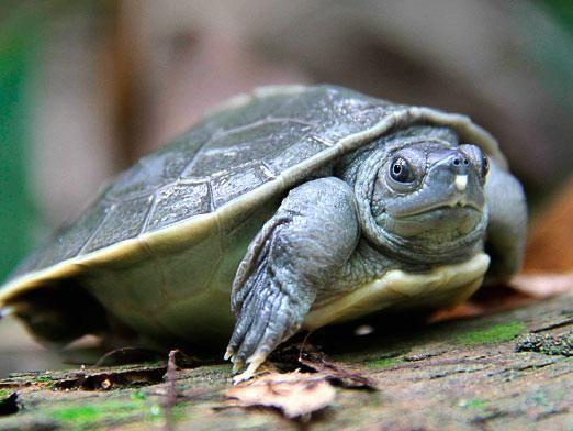 Скільки живуть черепахи?