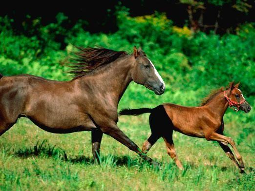 Скільки живуть коні?