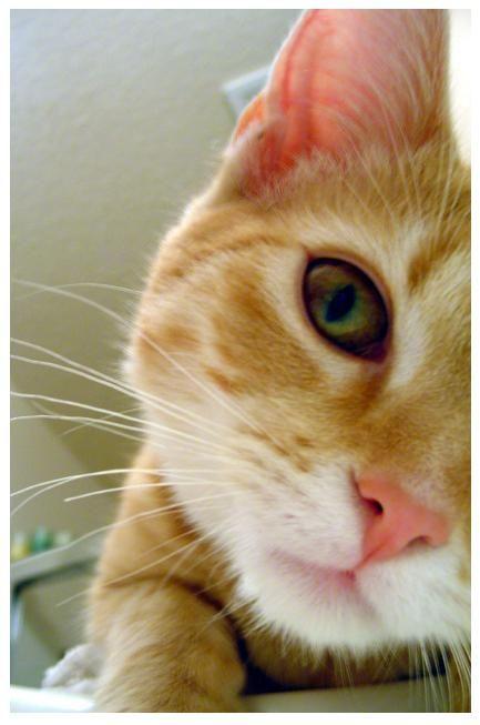 кішка чхає і сльозяться очей