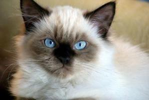 лікування очей у кішок