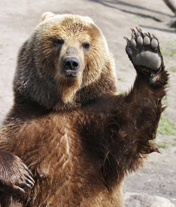 до чого сниться будинок з ведмедями