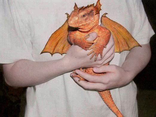 Существуют ли драконы?