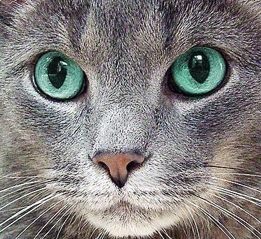 у кішки сльозяться очі