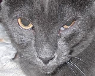 сльозяться очі у кошеняти
