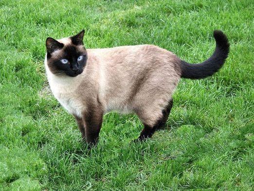 У кошки запор: что делать?