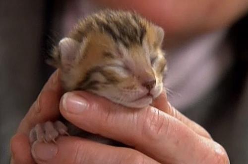 чому у кішки сльозяться очі