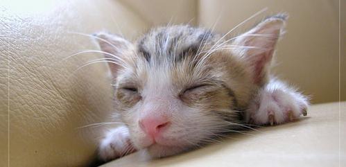 у кота гниють очі