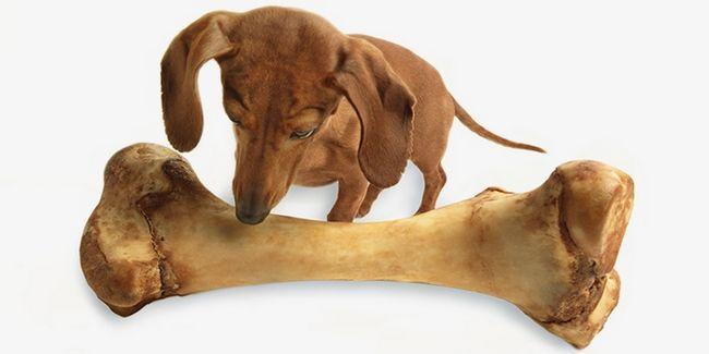 У собаки бурчить в животі через переїдання