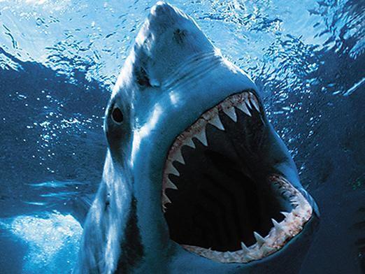 В каких морях водятся акулы?
