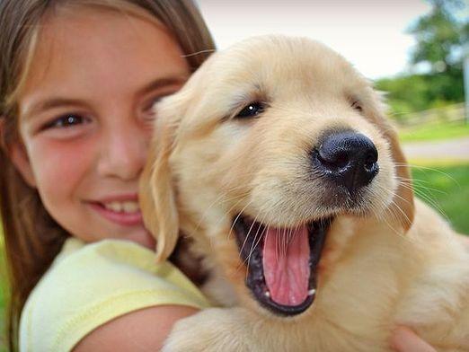 В каком возрасте брать щенка?