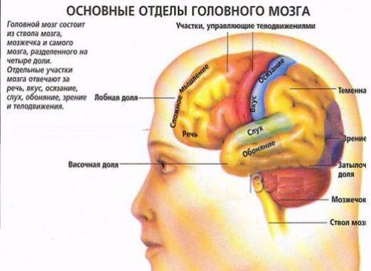 За что отвечает головной мозг?